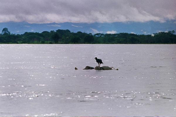 rio atrato